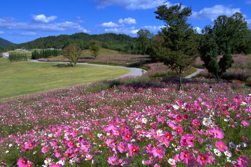 鮮やかな花のパレット~国営讃岐まんのう公園『秋!色どりフェスタ』~