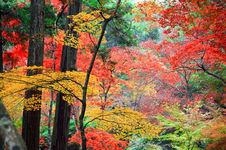 秋の彩りを楽しめる紅葉狩りスポット